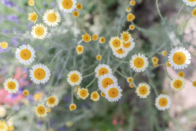 Meditative Massage als Entspannung für Körper und Seele.