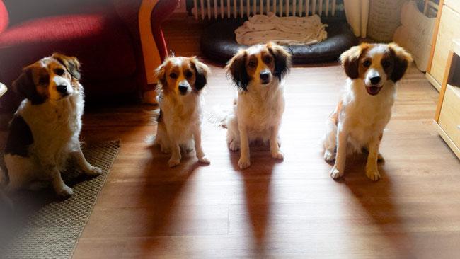 Bethje, Zhuri, Tilda & Bertie-Hati