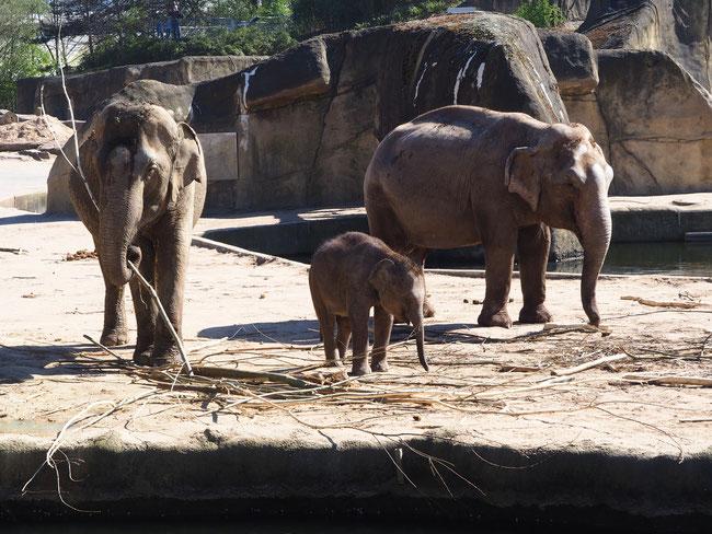 """Vorlage zum Video """"Einfaches Elefantenmotiv"""""""