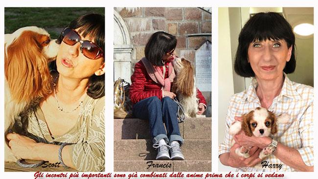 Collage di 3 foto con Scott, Francis e Harry