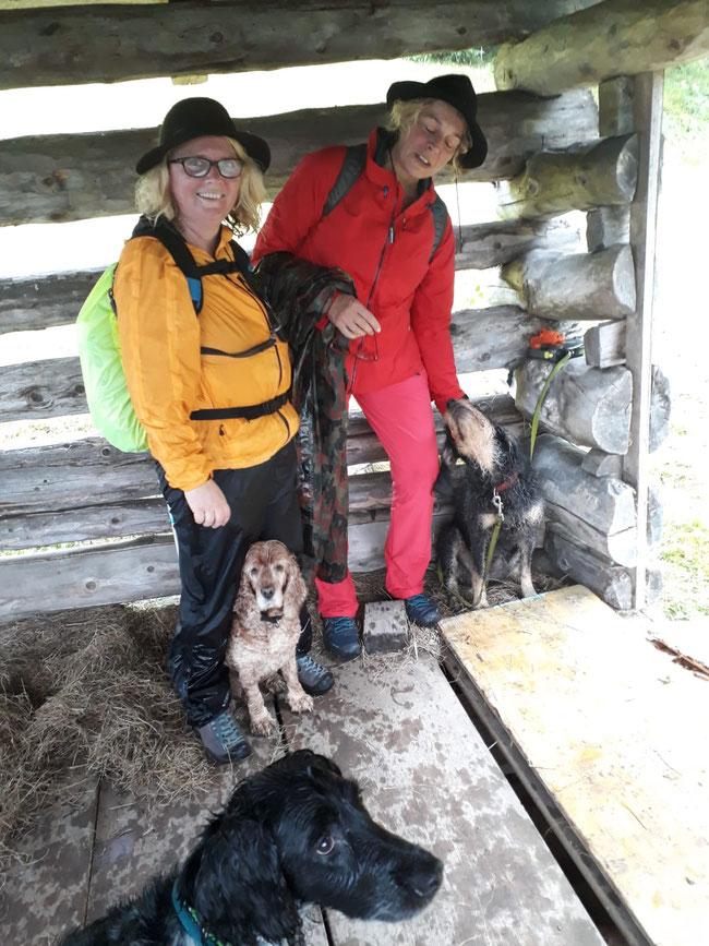 """auch Margot war froh über die kleine Pause im trockenen Heu. Der Regen schwemmte unseren """"Schafgeruch"""" zum Glück wieder runter"""