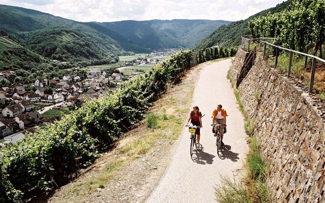 Fahrradtour in den Weinbergen © ADFC/Marcus Gloger
