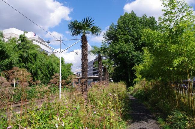 Palmenparadiese von Tita Giese