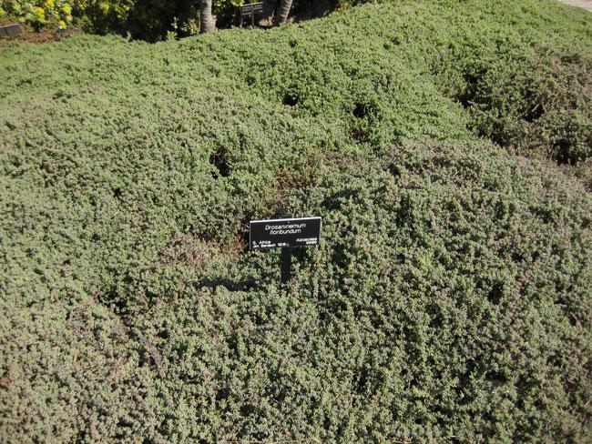 Planta en maceta de 15 cm