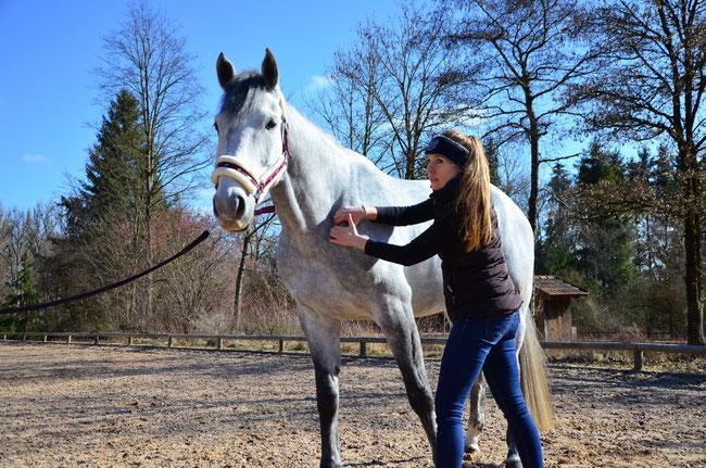 Pferdephysiotherapeutin München