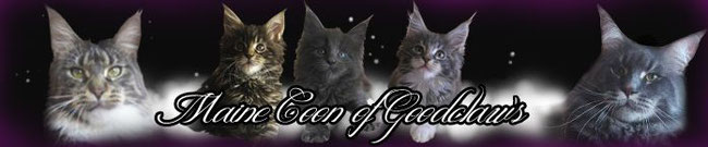 Maine Coon of Goodclaw's