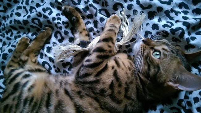 """Mein Sisalbonbon!"" - Leopold"