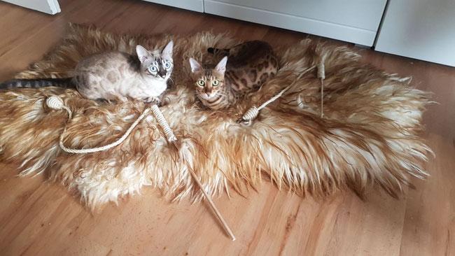 Cleopatra & Milou - wunderschön!