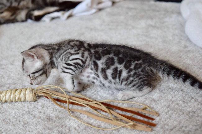 So eine große Angel, für so ein kleines Kitten! <3