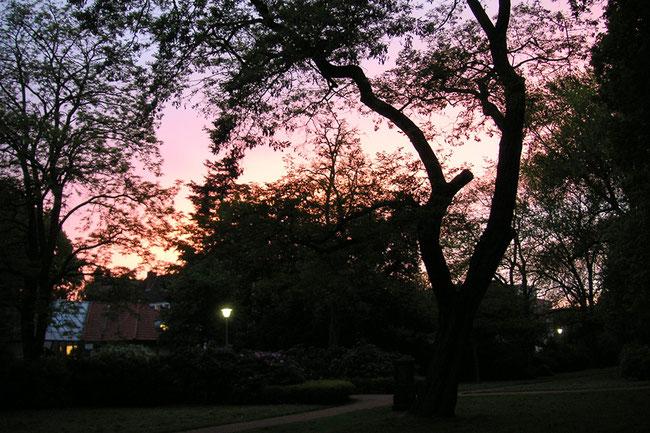 Foto vom Sonnenuntergang am Hörster Friedhof