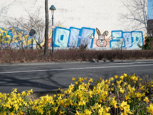 Frohe Ostern, Hase, Hauswand, Bonn, Grafitti, Narzissen, narcissus, rabbit,