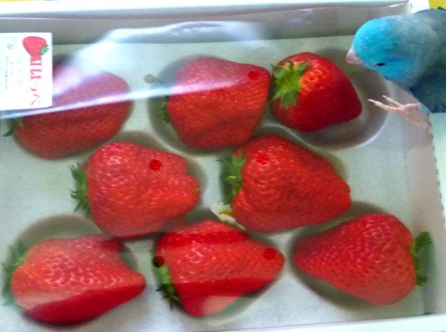 イチゴとあおい