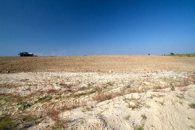 Rekultivierung von aufgeschütteten Flächen im Tagebau Welzow-Süd
