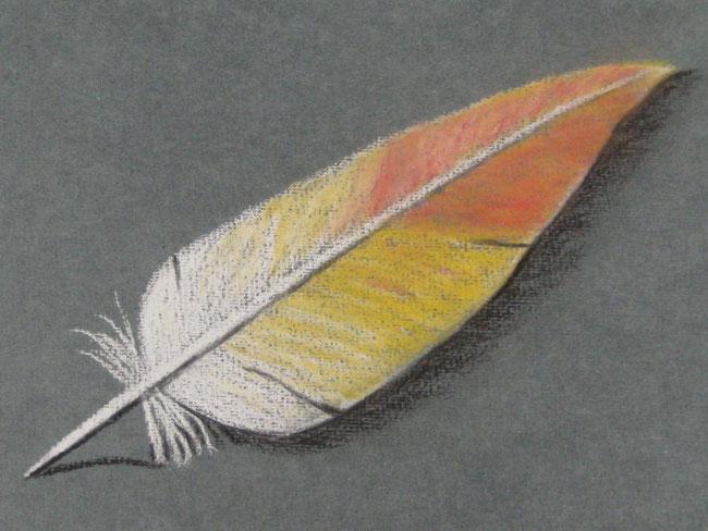 Skizze Feder, Pastell