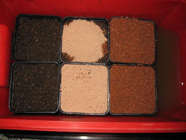Links Töpfe mit Lavalit, in der Mitte mit Kieselgur aufgefüllt, rechts mit abgekochtem Wasser übergossen