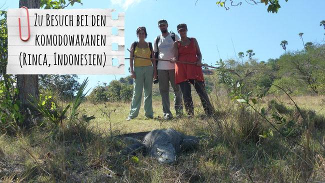 Komodowarane, Rinca, Komodo Nationalpark, Echsen, Indonesien, Franzls On Tour