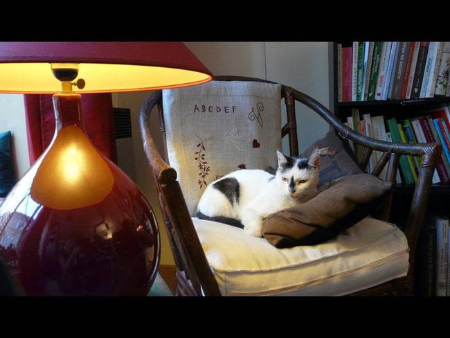 La chatte aime beaucoup passer du temps dans notre salon de thé...