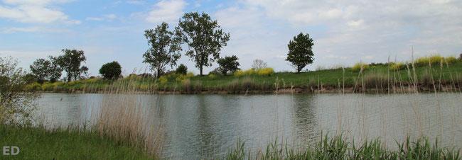 photo d'un paysage du marais poitevin prise par Elisabeth Deschene