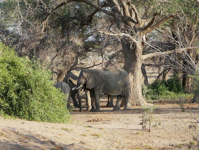 Elefanten trinken aus dem Wasserreservouir des Campingplatzes