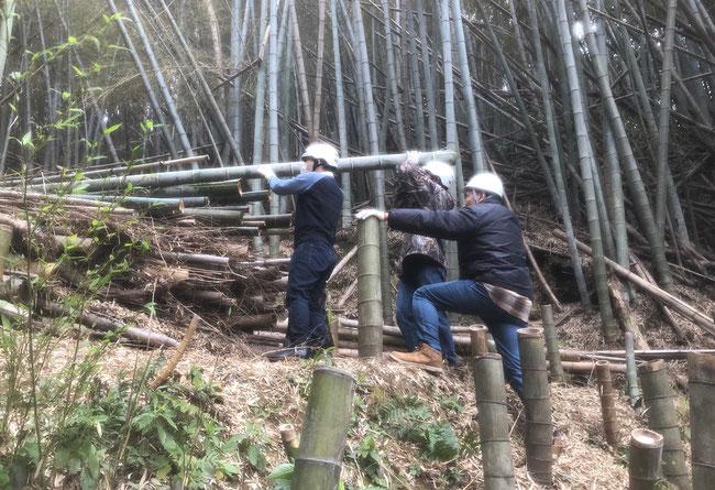鞍持さんの指揮により伐採した竹を運ぶ注さんと寛平さん まるで災害レスキュー隊のようです。