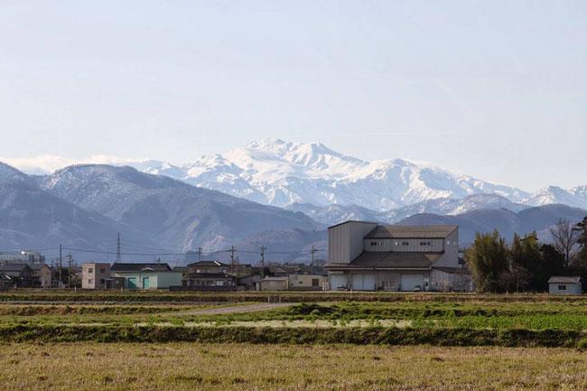 水田から望む、日本三名山の1つ白山。雄大な自然が、特上米を育む。