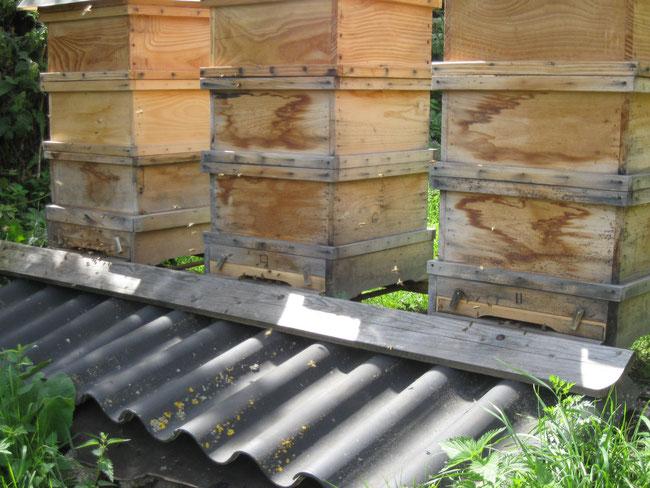 So sehen sie dann nach 10-15 Jahren aus. Wichtig ist, dass das Wasser an den Holzteilen ablaufen kann. Ungestrichen kann das Holz atmen, und bietet den Bienen ein optimales Raumklima.