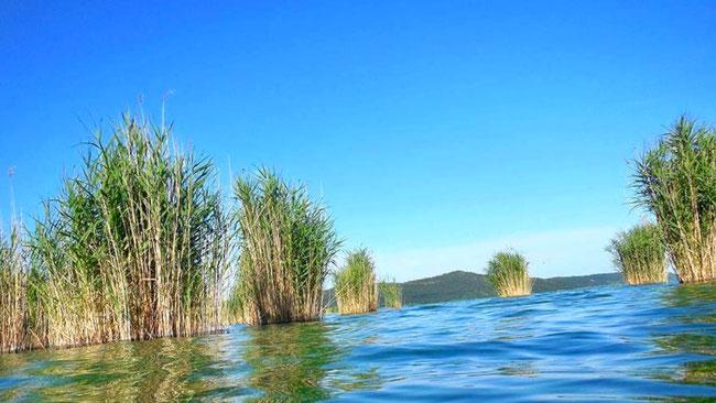 Камышовые островки на Балатоне