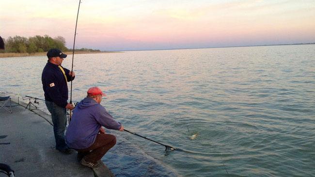 Поймать вкусную балатонскую рыбку можно и с берега