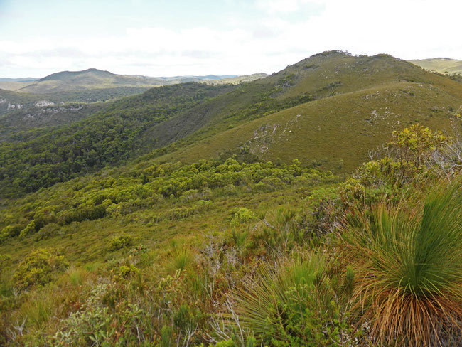 The interior of Rocky Cape National Park