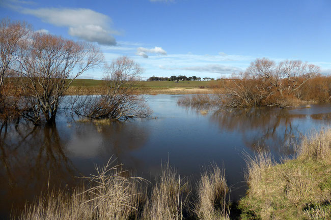 Flooded Macquarie River