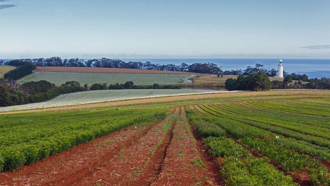Poppies, other crops, and red soil on Table Cape