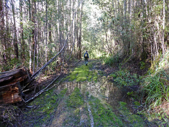 Boggy track