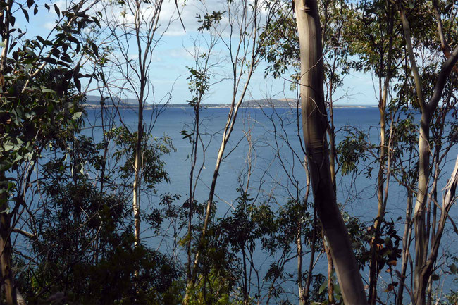 The view across to Opossum Bay and Arm End