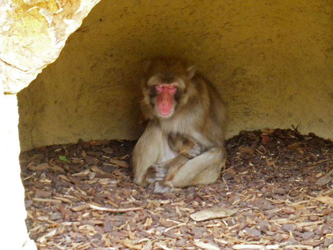 A monkey in a cave