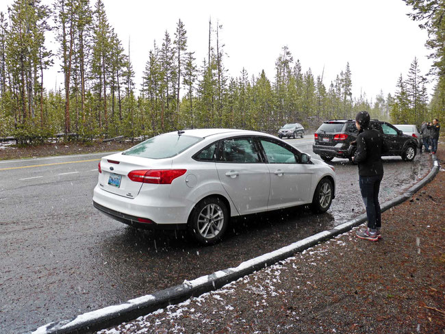 Our hire car, stopped to admire the falling snow at Mt Washburn, Yellowstone National Park