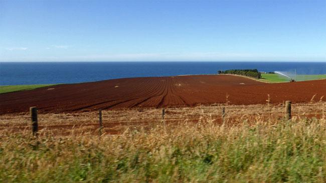 Tasmanian red soil
