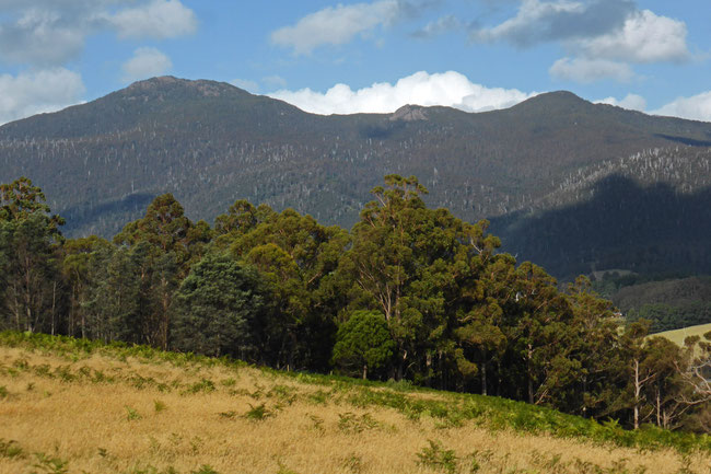Mt Montagu and Montagu Thumbs