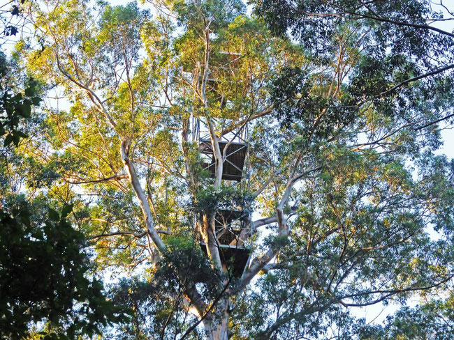 The Dave Evans Bicentennial Tree lookout