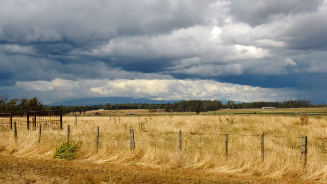 Tasmanian northern rural scenery
