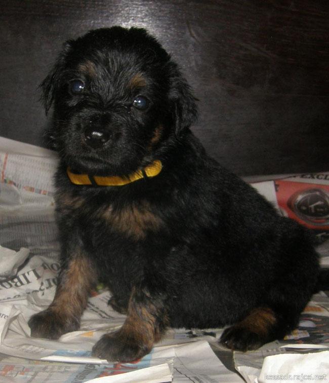 ook Belle was ooit een pup   /      Belle as a cute little puppy