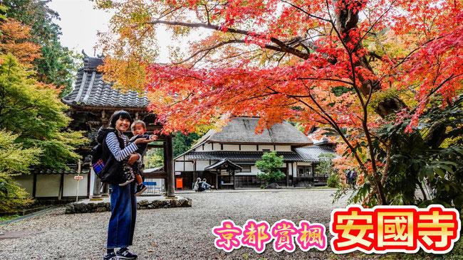 【京都賞楓】2019年 綾部 安國寺 茅草屋與紅葉絕景