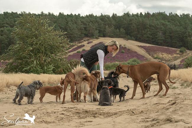 Hundebetreuung, Gassiservice, Ausführservice für Hunde Potsdam