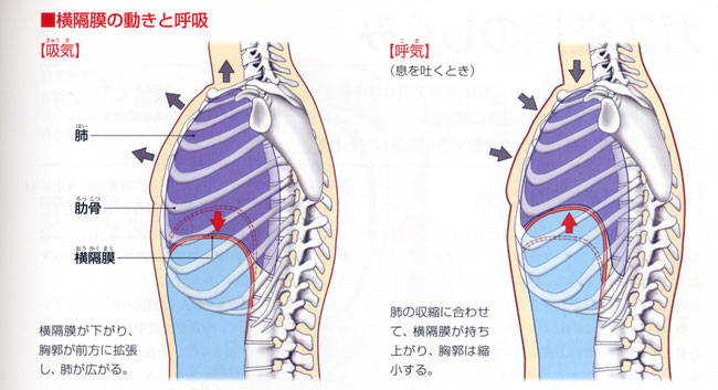 「ぜんぶわかる人体解剖図」 成美堂出版から