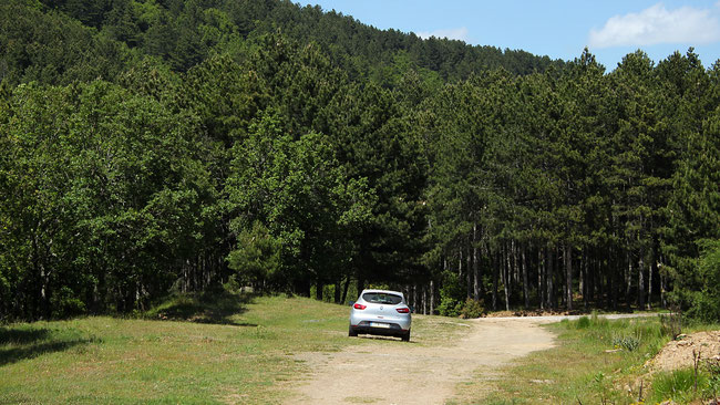 Forests in Halkidiki