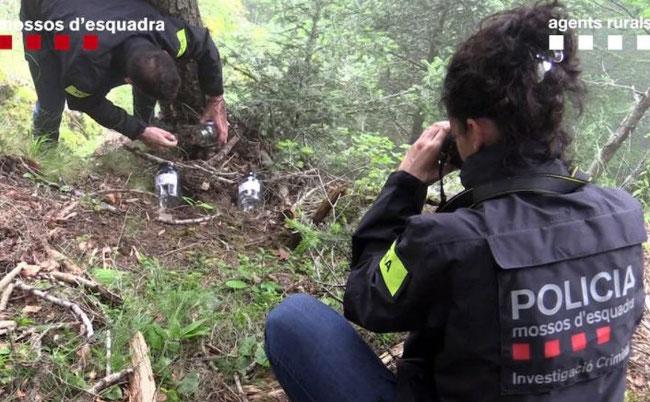 Investigadors en el lloc de la mort de l'ós Cachou CRÈDIT: Mossos