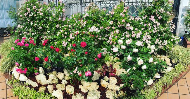 三原市 ガーデン 薔薇 バラ 庭づくり 庭園