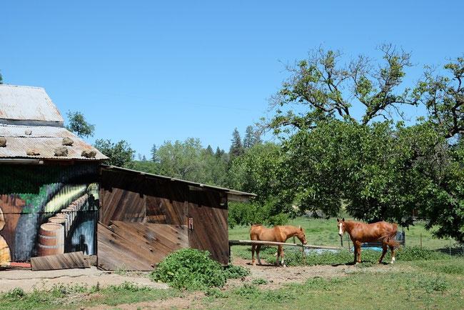 Rundyは今やすっかりFarmer。ひまわり畑作りに精を出してるとか?