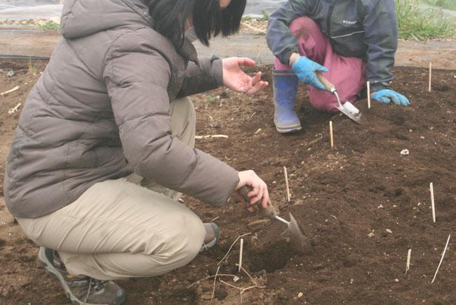 相模原里山農園での収穫体験