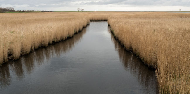 Bild: Die Landschaft in Maastricht an der Schlei in Schleswig Holstein