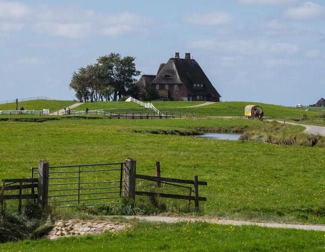Bild: Haus auf Hallig Hooge